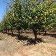 Campo de 77 Hectareas plantadas en excelente zona.-