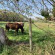 7,27 hectáreas agrícolas a minutos de Talca!!