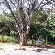 Terreno na Avenida Benedito Isaac Pires, Cotia, Parque Dom Henrique, por R$ 170.000