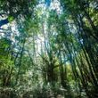 Hermoso terreno de 2,97 hectáreas ubicado a solo 7 minutos de Pucón.
