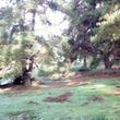 6 terrenos en Los Pinos de Reñaca
