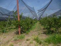 Finca/Rancho en Venta en Congregación San Antonio de las Alzanas