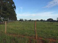 Fazenda para produção de cana da açúcar e criação de gado em São José do Rio Preto SP