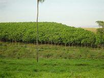 Sítio rural à venda, Centro, Nova Castilho.