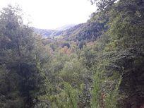 Terreno camino a Termas de Chillan