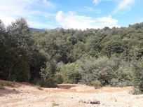 Se venden 60 hectareas en San Fabian de Alico
