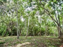TERRENO EN VENTA EN COLONIA CRISTAL - TULUM-  JUNGLE LAND in TULUM