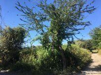 Terreno en Venta en Tlachichilco