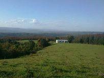 Excelente campo Sector Rinconada, Comuna de Fresia 63 has.