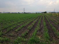 Desde 20 hectáreas a Terrenos en Palo Alto, Querétaro.