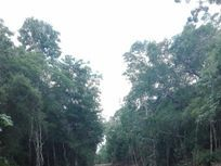 Terreno 1,000 m2 en desarrollo ecológico y sustentable.