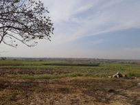 El Campo El Llano Pueblo de Alpuyeca, terreno en venta