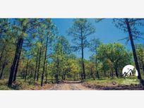 Terreno en Venta en Bosques de Llano Grande