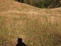 Campo limpio con  bosque Nativo.