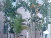 Apartamento com 2 dormitórios à venda, 53 m² por R$ 181.000 - Conjunto Residencial José Bonifácio - São Paulo/SP