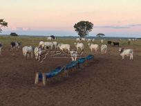 Fazenda com 900 alqueires goianos em Primavera do Leste MT