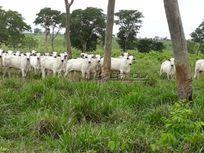 Fazenda com 400 Alqueires em Santa Rita do Pardo – MS
