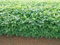 Fazenda com 1.400 hectares em Araguacema - TO