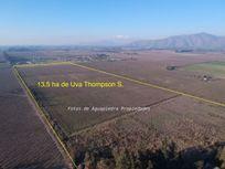 Oportunidad Gran Plusvalia, Terreno agrícola sector Oliveto de Talagante