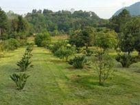 Hermoso Terreno en Venta con Huerta de Aguacates en Pipiol, Valle de Bravo.