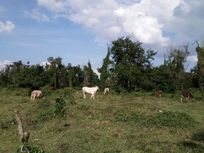 Rancho en Coatzintla, Ver.
