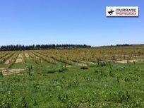 VICTORIA: Fundo agroindustrial