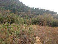Terreno en Venta en Tilostoc