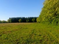 Se vende campo 174 hectareas agricolas septima region