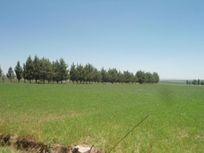 Finca/Rancho en Venta en Dolores Hidalgo Centro