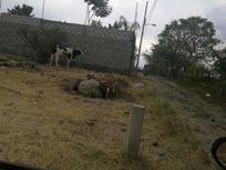 Terreno en Venta en ATLACOMULCO