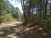 Terreno en Venta en Fraccionamiento Bosques de la Cañada