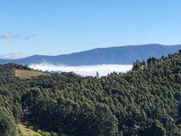 Fazenda de Oliveiras em Cristina-MG