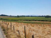 Campo en comuna de Bulnes, cerca de Chillán