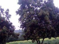 Terreno La Paloma, 9800mts2, Comuna de Buin