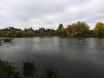 Parcela 9 has. rio Putagan -Linares