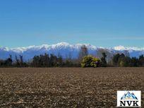 Terreno agrícola de 14,5 hectáreas en venta