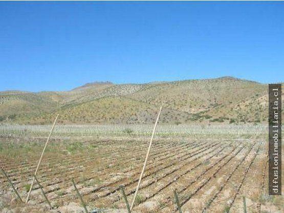 Se Vende Terreno Agrícola  IV Región La Higuera