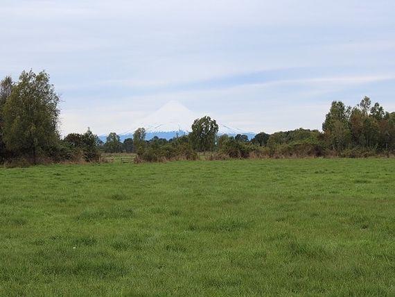 Campo Ganadero