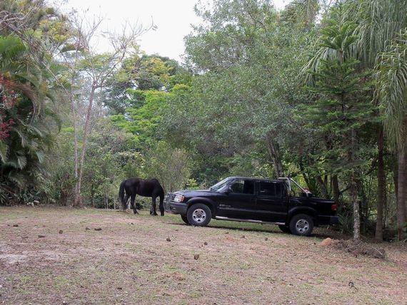 """Sítio rural à venda, Canaã, <span itemprop=""""addressLocality"""">Jambeiro</span>."""