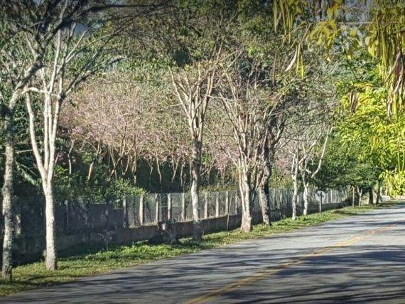 """Terreno residencial à venda, <span itemprop=""""addressLocality"""">Patrimônio do Carmo</span>, São Roque - TE0721."""