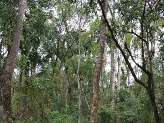 "Terreno residencial à venda, <span itemprop=""addressLocality"">Jardim Santa Paula</span>, Cotia."