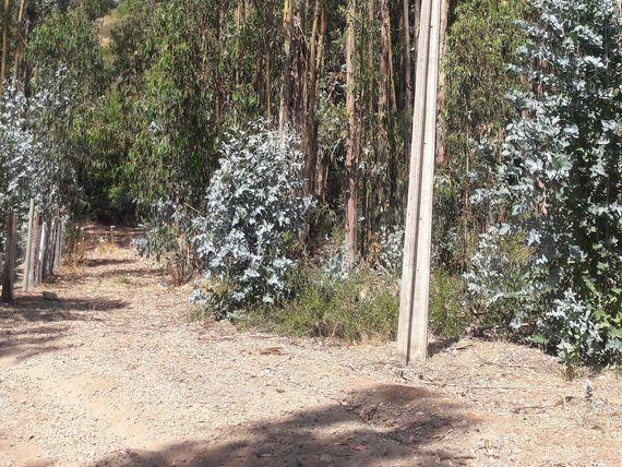 Linda Parcela en Condominio Bosques de Mantagua