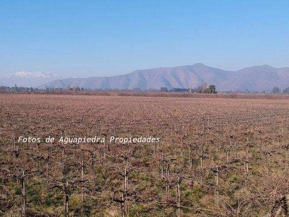 """Oportunidad Gran Plusvalia, Terreno agrícola sector Oliveto de <span itemprop=""""addressLocality"""">Talagante</span>"""