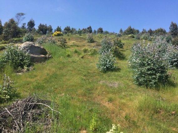 Magnífico terreno en Fundo Zapallar