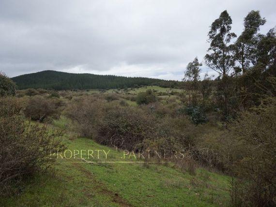 Campo Forestal Cauquenes