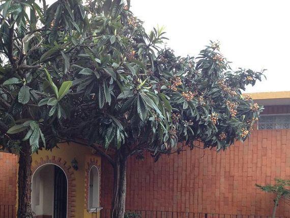 """Loft en Planta baja 1 Recamara, Rancho Cortés, <span itemprop=""""addressLocality"""">Cuernavaca</span>, Norte"""