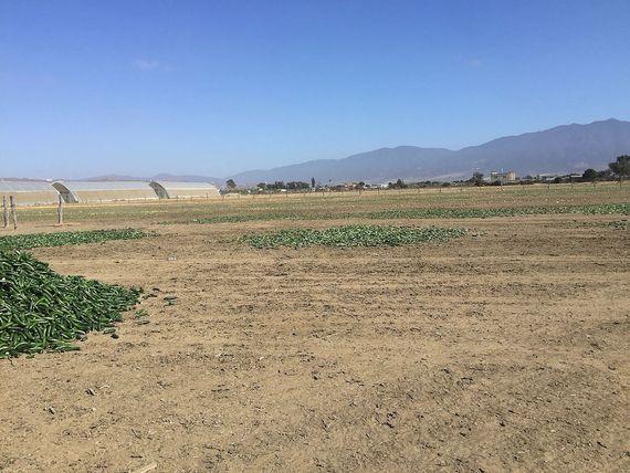 """Se Vende 2.5 hectáreas en <span itemprop=""""addressLocality"""">El Salitral</span>, en Ensenada, B.C a 16 dlls m2"""