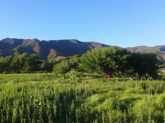 Oportunidad Inversionistas Gran Parcela en Valle del Elqui