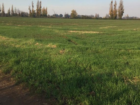 "Se venden 150 hectareas agricolas en <span itemprop=""addressLocality"">Bulnes</span>"