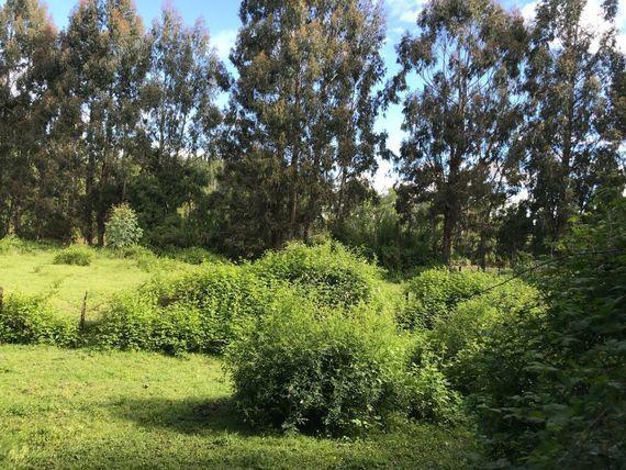 Campo / Parcela con Casa en IX Región